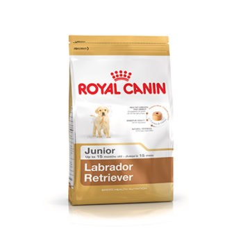 royal canin jack russel junior patches and paws. Black Bedroom Furniture Sets. Home Design Ideas