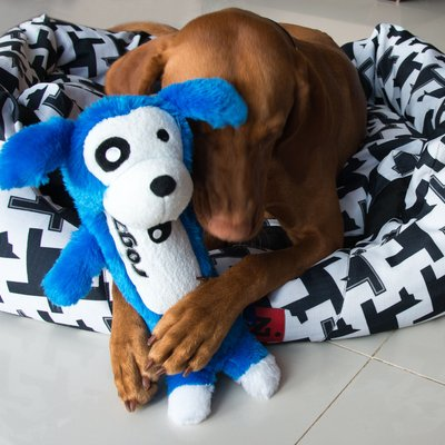 Large dog with blue doggy toy