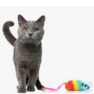 Cat toys & more