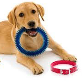 Dog toys & more